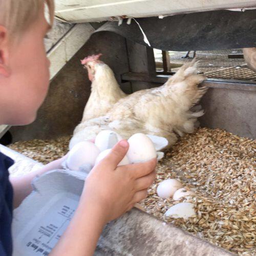 Bauernhof für Großstadtkinder – Besuch bei den glücklichen Hühnern