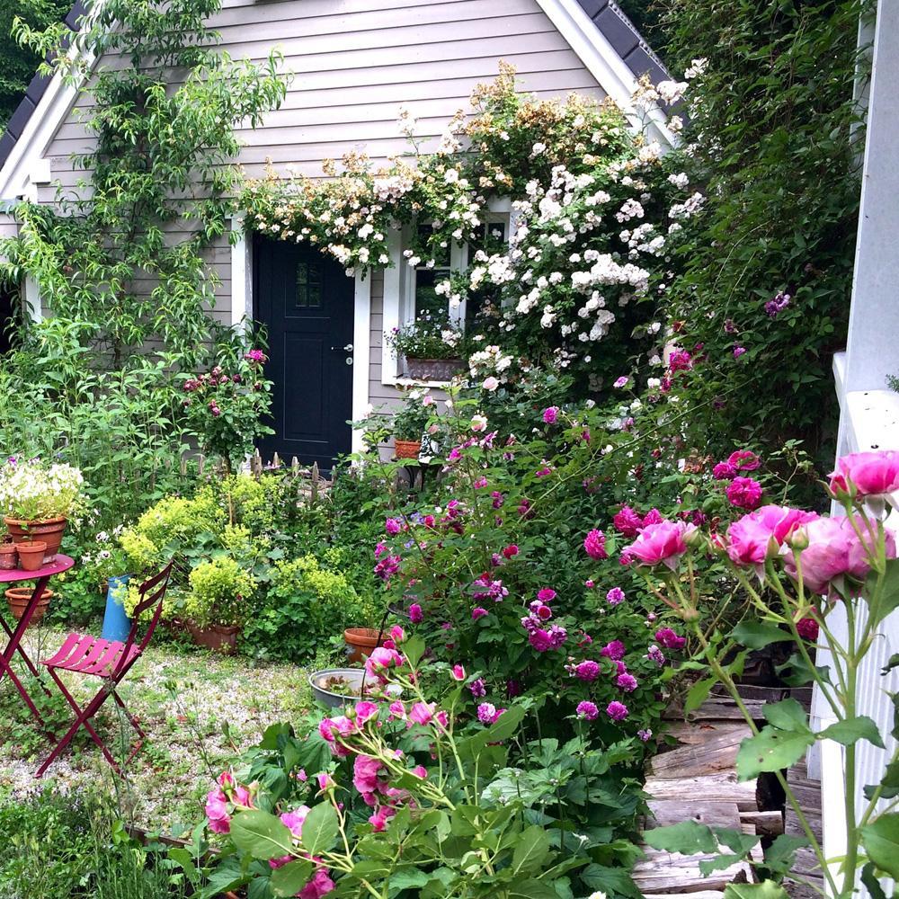 Cottage Garten - Wilde Rosen