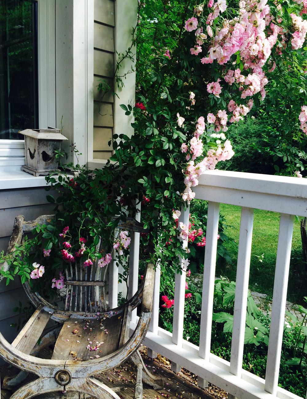 Cottage Garten - Terrasse mit Rosenranken