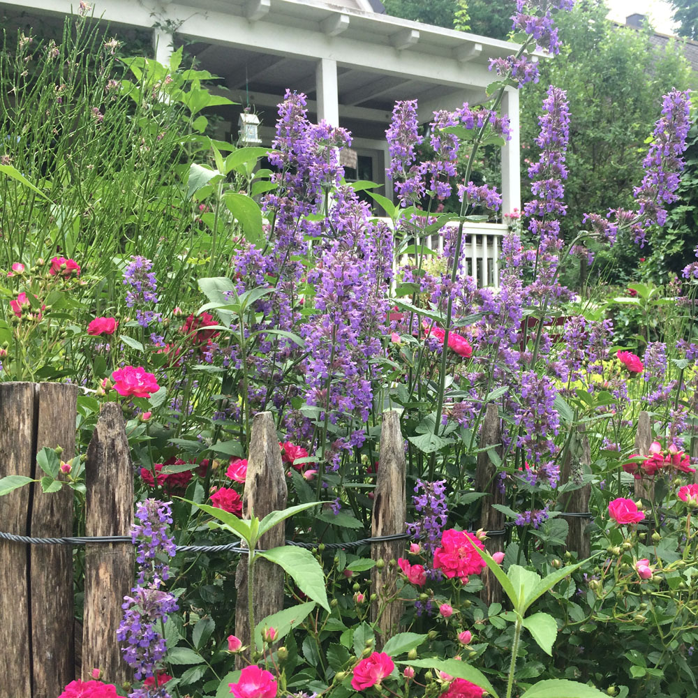 Cottage Garten - Pflanzen