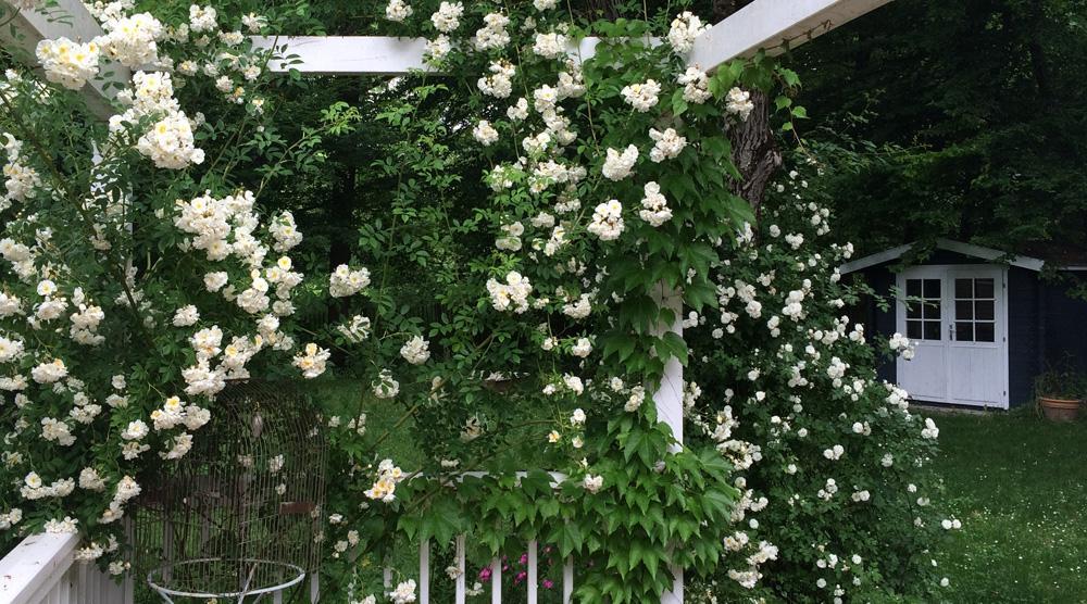 Cottage Garten - Rosenspalier