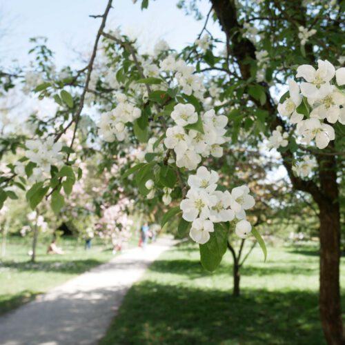 Endlich Kirschblütenzeit! – 4x japanische Teatime