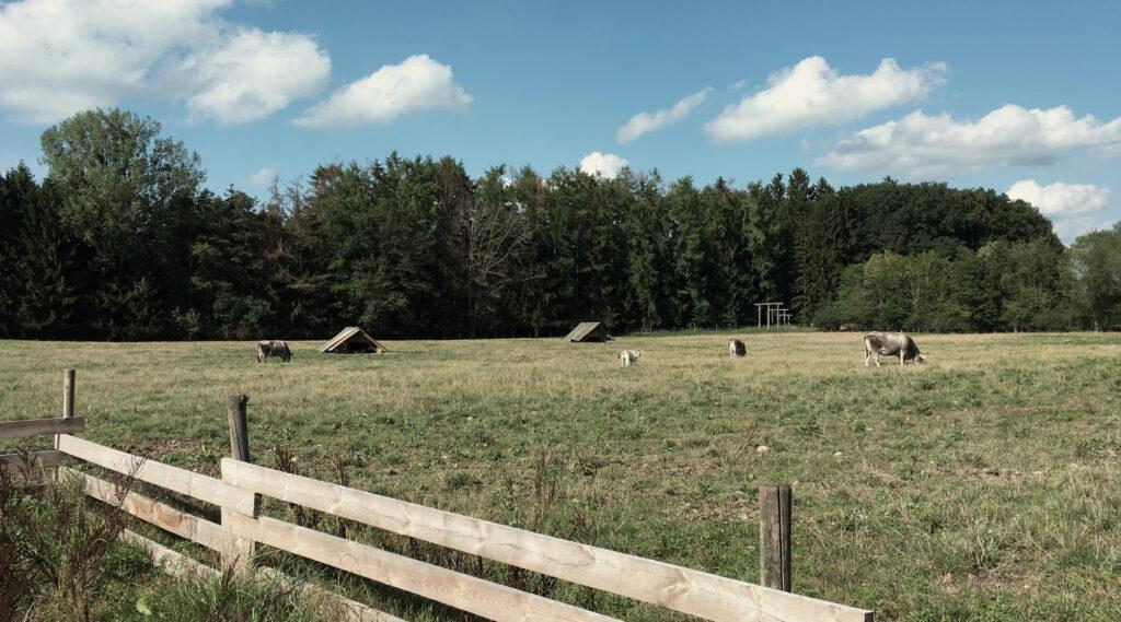 Bauernhof Hermannsdorfer - Weide